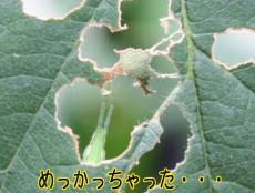 2009_08_13_8829bb.jpg