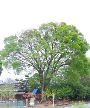 僕たちの木