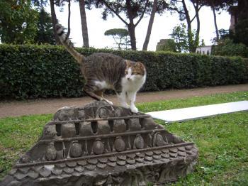 遺跡の上の猫くん