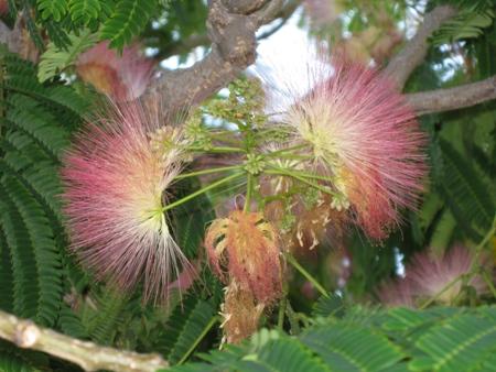 珍しい植物1