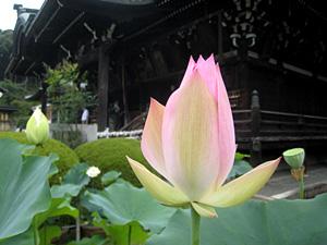 mimurodo_090814_5.jpg
