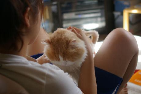 IMGP3692ー猫