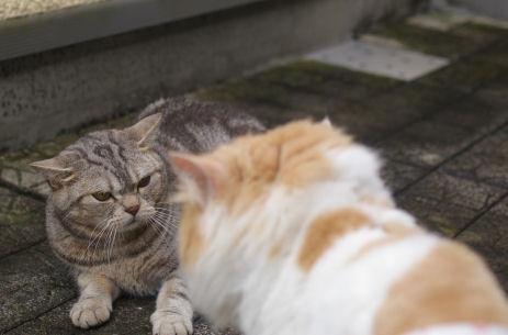 IMGP3699ー猫