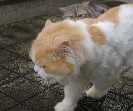 IMGP3700ー猫