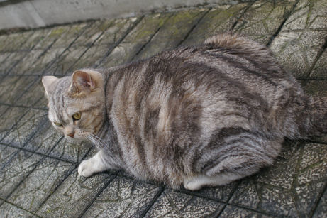 IMGP3705-猫