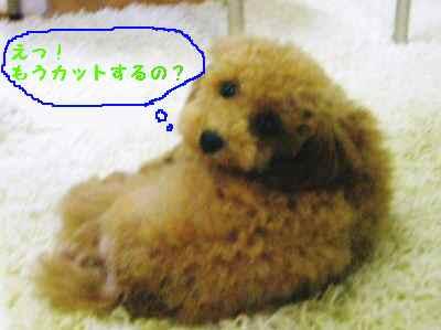 2009年07月14日_CIMG0158~1