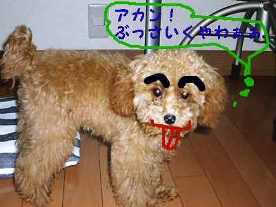 2009年08月09日_CIMG0117