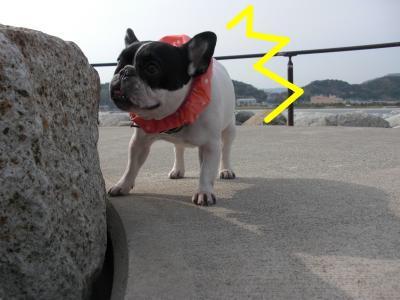 snap_vivipu_20116503628.jpg