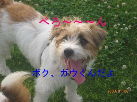 繧ャ繧ヲ蜷媽convert_20090711000113[1]