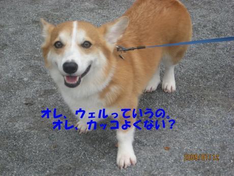 117_convert_20090717001733[1]