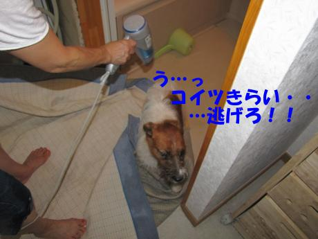 065_convert_20090809194102[1]