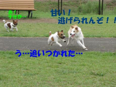 8_convert_20090830201807[1]