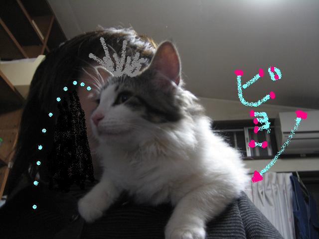 肩乗り猫 032