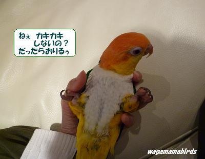 wagamama04005.jpg