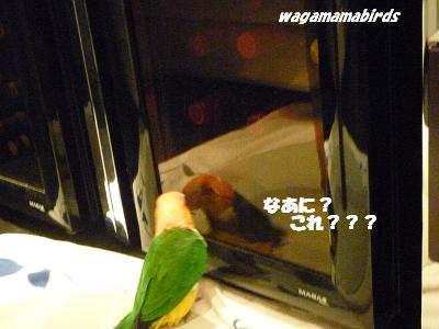 wagamamab10413.jpg