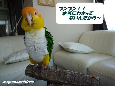 wagamamab29480.jpg