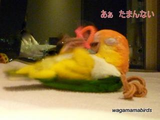 wagamamab607102.jpg