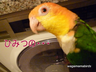 wagamamab610203.jpg
