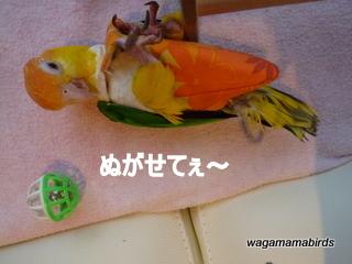 wagamamab614204.jpg
