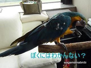 wagamamab6150010.jpg