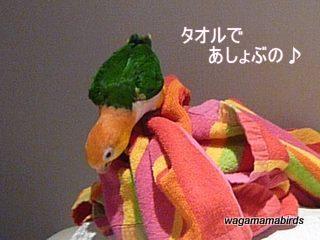 wagamamab621101.jpg