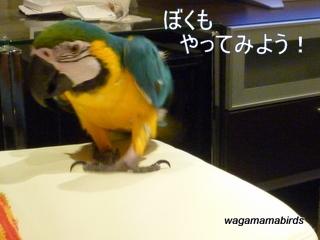 wagamamab621102.jpg