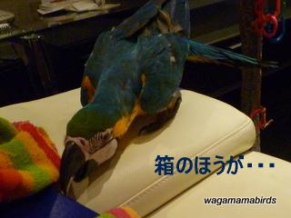 wagamamab621103.jpg
