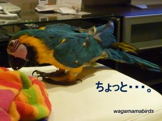wagamamab621104.jpg