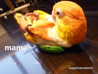 wagamamab623103.jpg