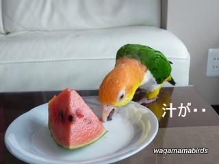 wagamamab624105.jpg