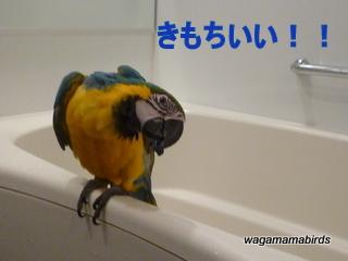 wagamamab627111.jpg