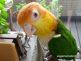 wagamamab714104.jpg