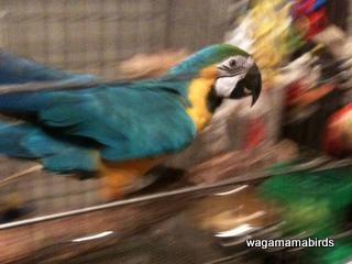 wagamamab810101.jpg