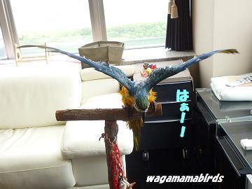 wagamamar603101.jpg
