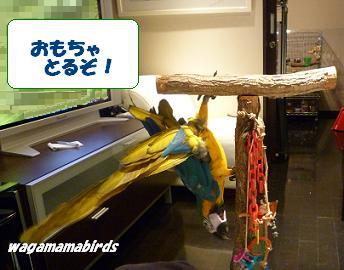 wagamamar604201.jpg