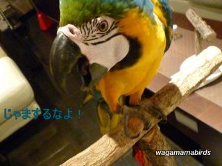 wagamamar606103.jpg