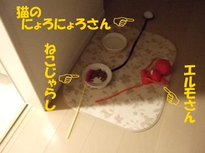DSCF1673.jpg