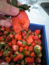 苺2 ちんこ