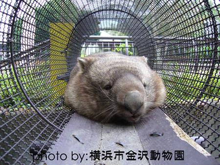 金沢動物園_ヒロキ02