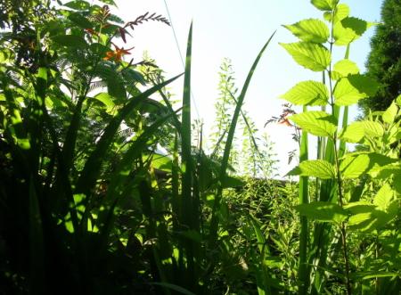 夏の庭の草花