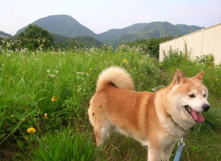花畑で遊ぶ