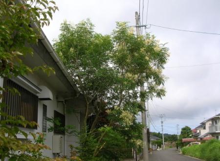 車庫前の電柱