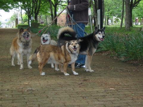 犬たち40017