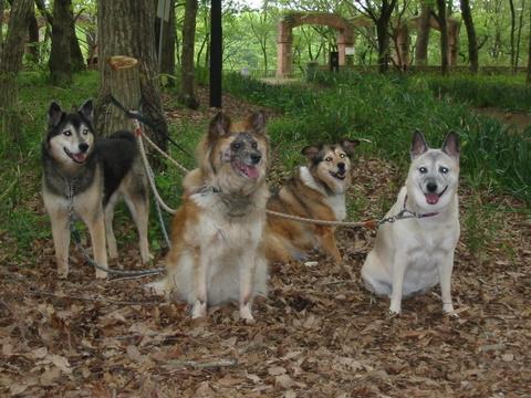 犬たち40021