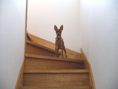 エイプ階段