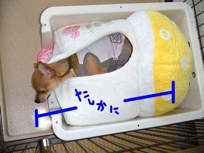 snap_yamatoss_200981212845.jpg