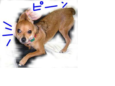 snap_yamatoss_20098395611.jpg
