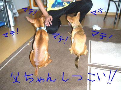 snap_yamatoss_200984105336.jpg