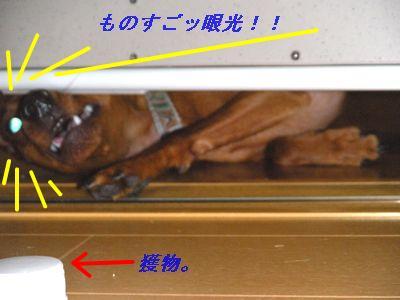 snap_yamatoss_200986212614.jpg
