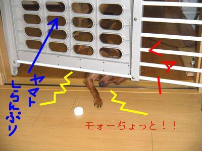 snap_yamatoss_200986213057.jpg
